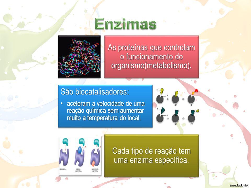 Enzimas As proteínas que controlam o funcionamento do organismo(metabolismo). São biocatalisadores: