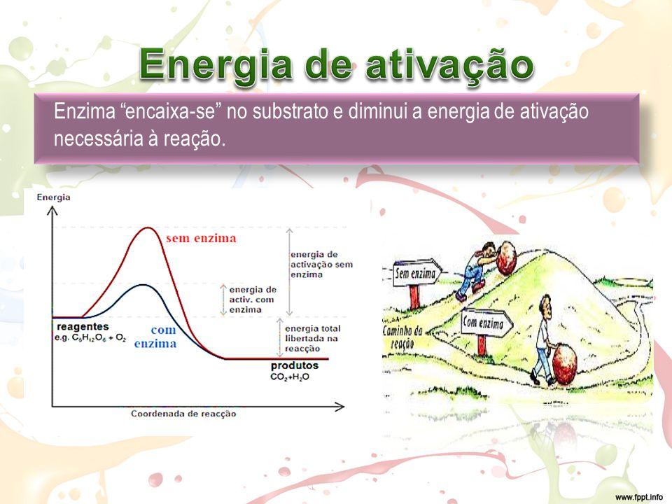 Energia de ativação Enzima encaixa-se no substrato e diminui a energia de ativação necessária à reação.