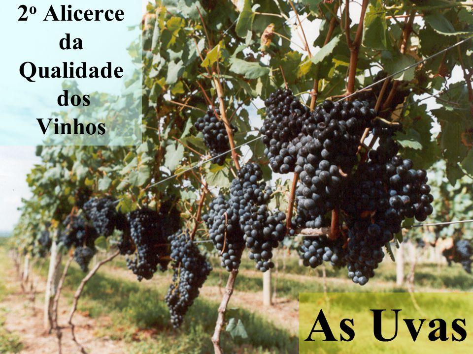 2o Alicerce da Qualidade dos Vinhos
