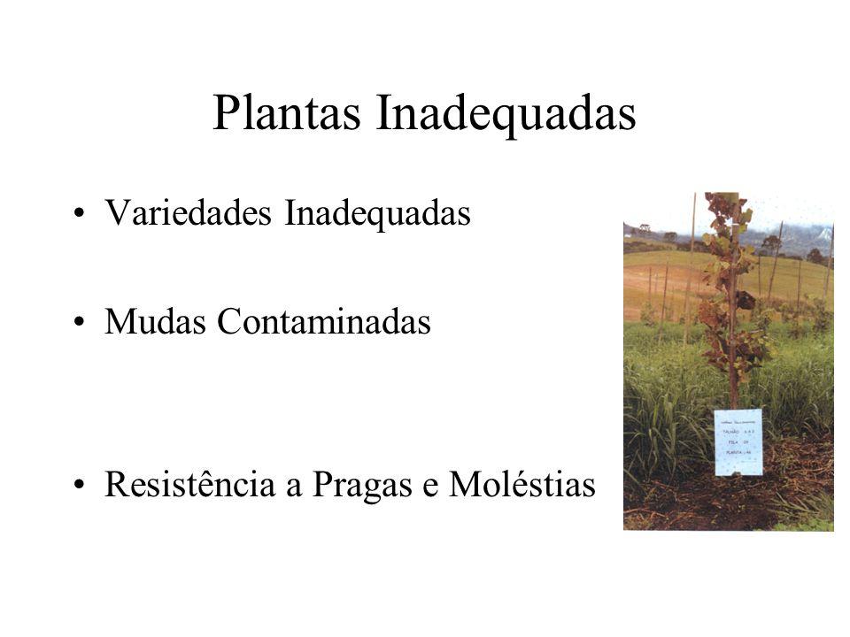 Plantas Inadequadas Variedades Inadequadas Mudas Contaminadas