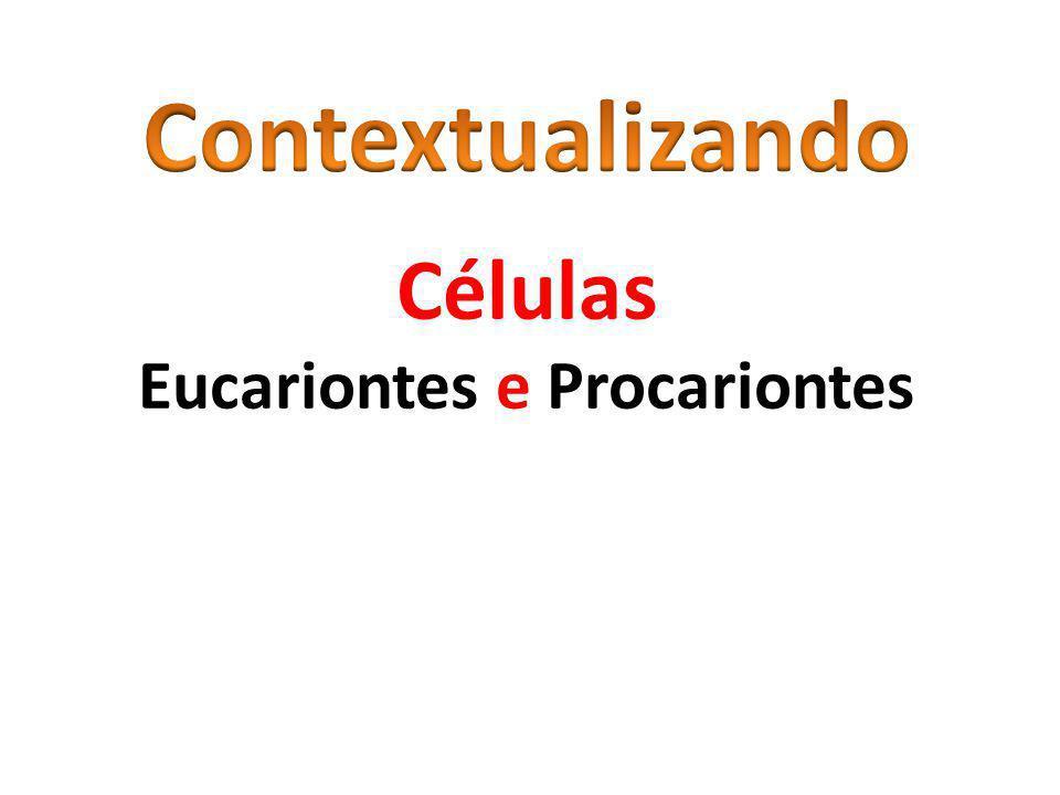 Eucariontes e Procariontes