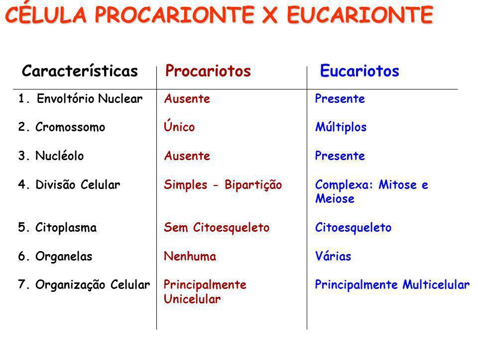 CÉLULA PROCARIONTE X EUCARIONTE
