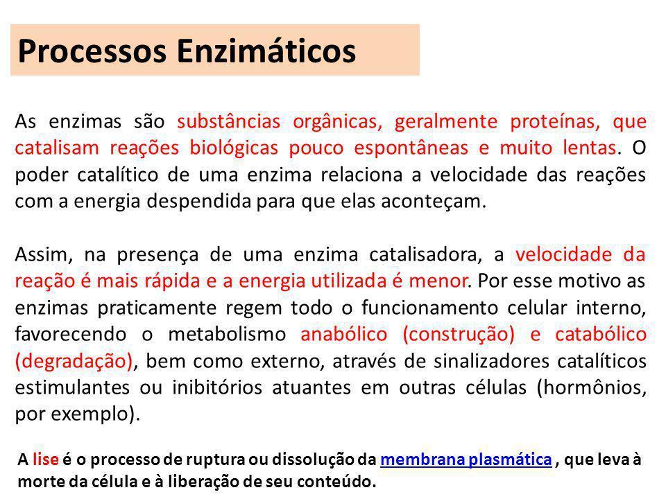 Processos Enzimáticos