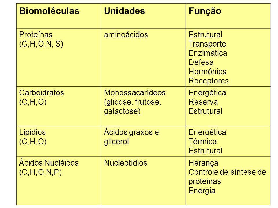 Biomoléculas Unidades Função Proteínas (C,H,O,N, S) aminoácidos