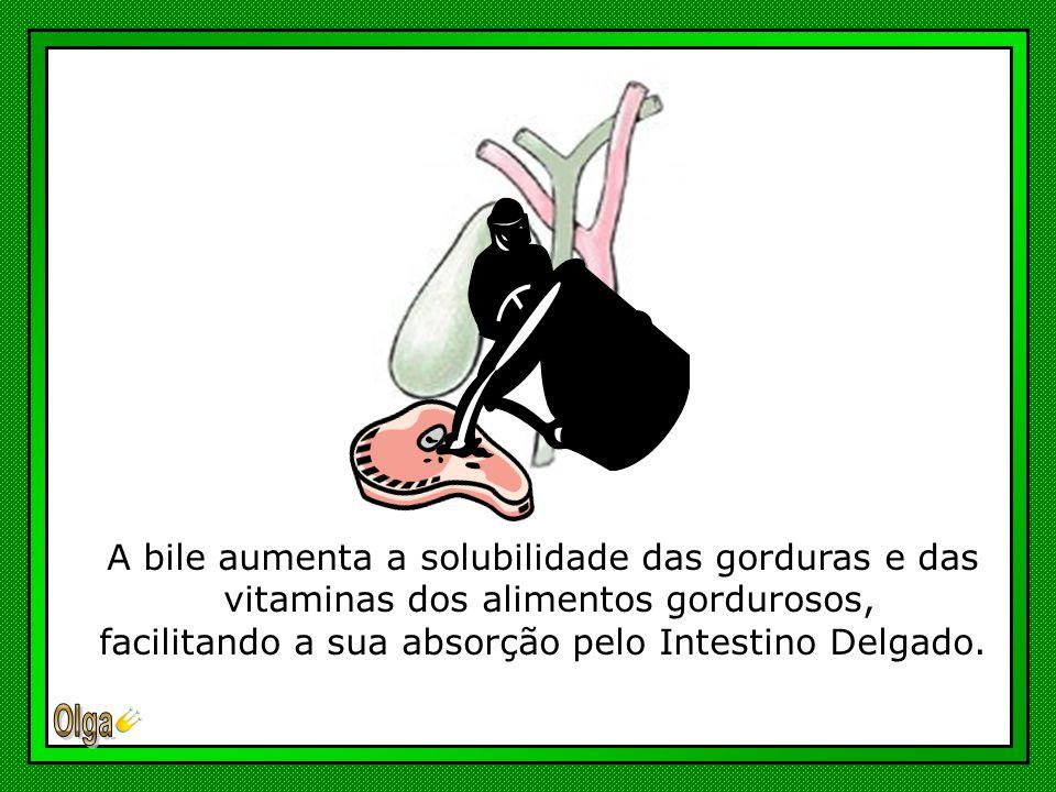 A bile aumenta a solubilidade das gorduras e das