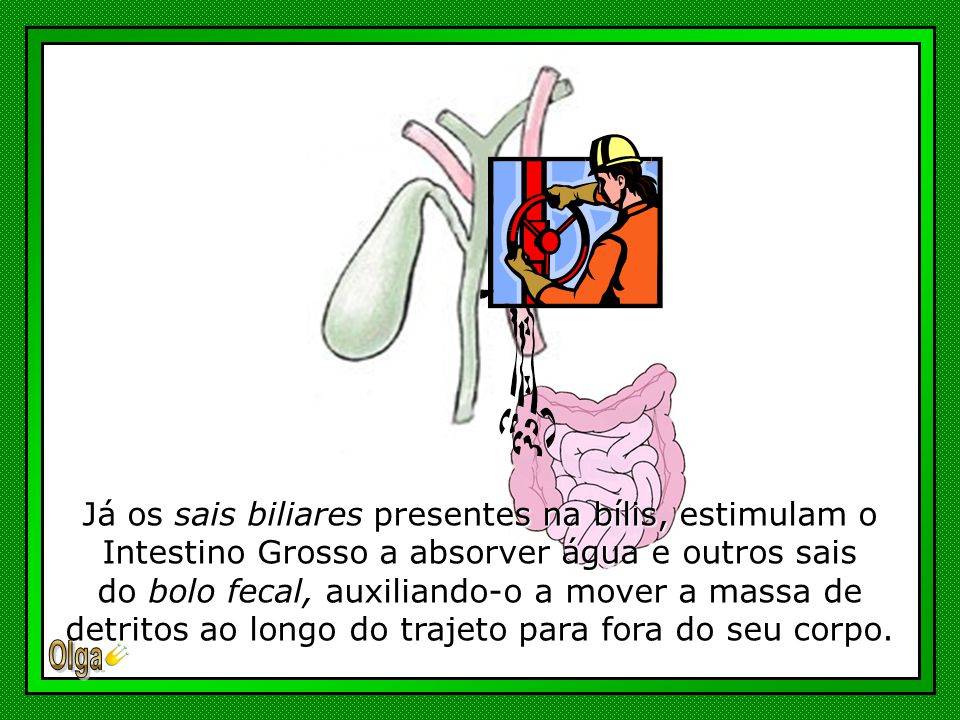Já os sais biliares presentes na bílis, estimulam o