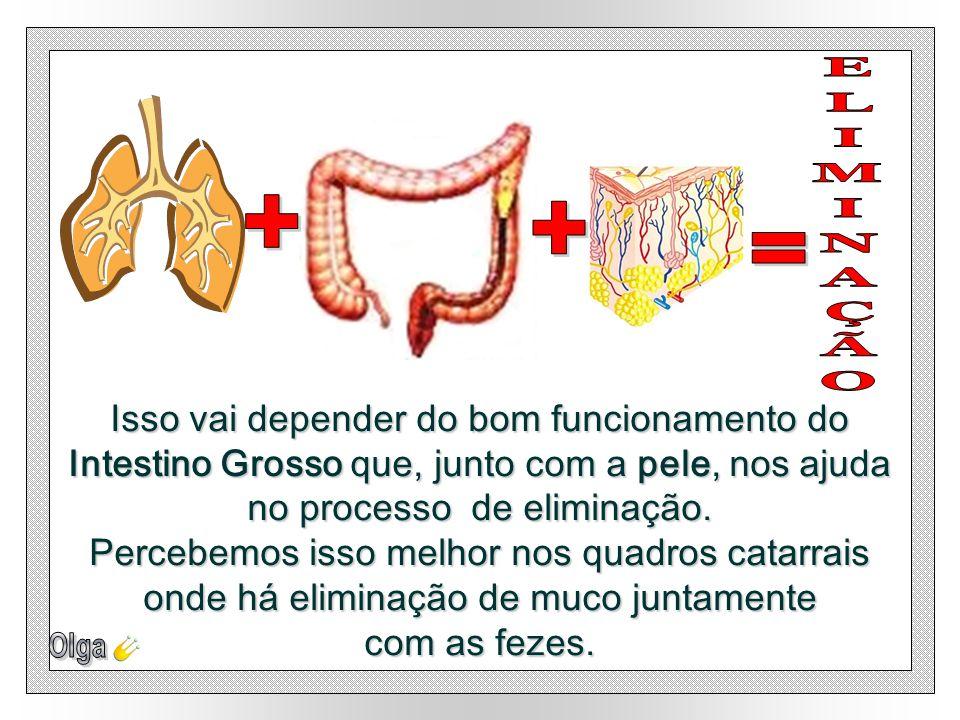 + ELIMINAÇÃO. + = Isso vai depender do bom funcionamento do Intestino Grosso que, junto com a pele, nos ajuda no processo de eliminação.