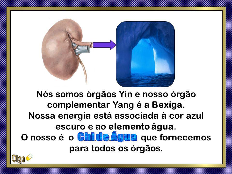 Nós somos órgãos Yin e nosso órgão complementar Yang é a Bexiga.