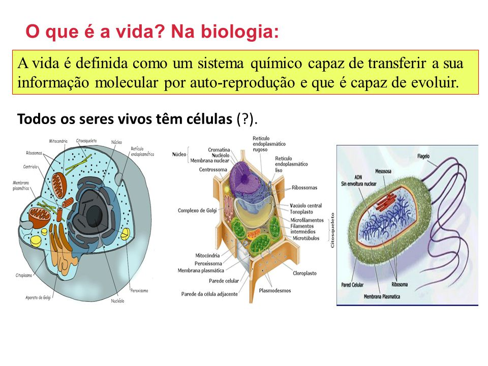 O que é a vida Na biologia: