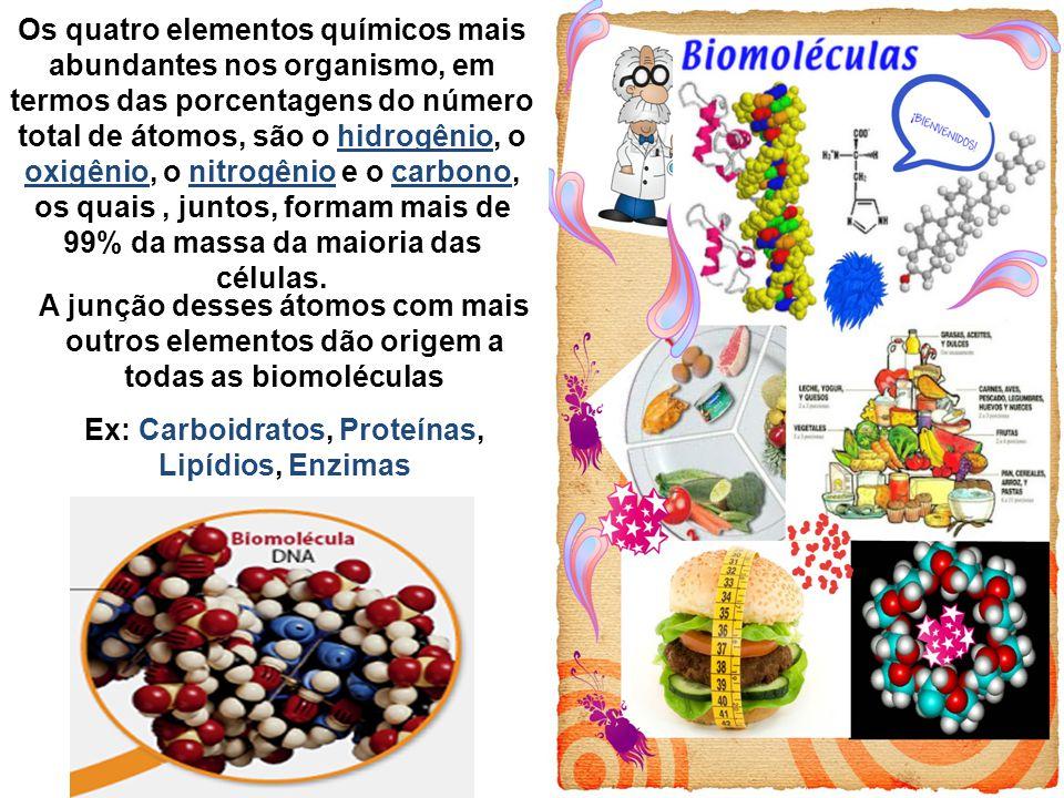 Ex: Carboidratos, Proteínas, Lipídios, Enzimas