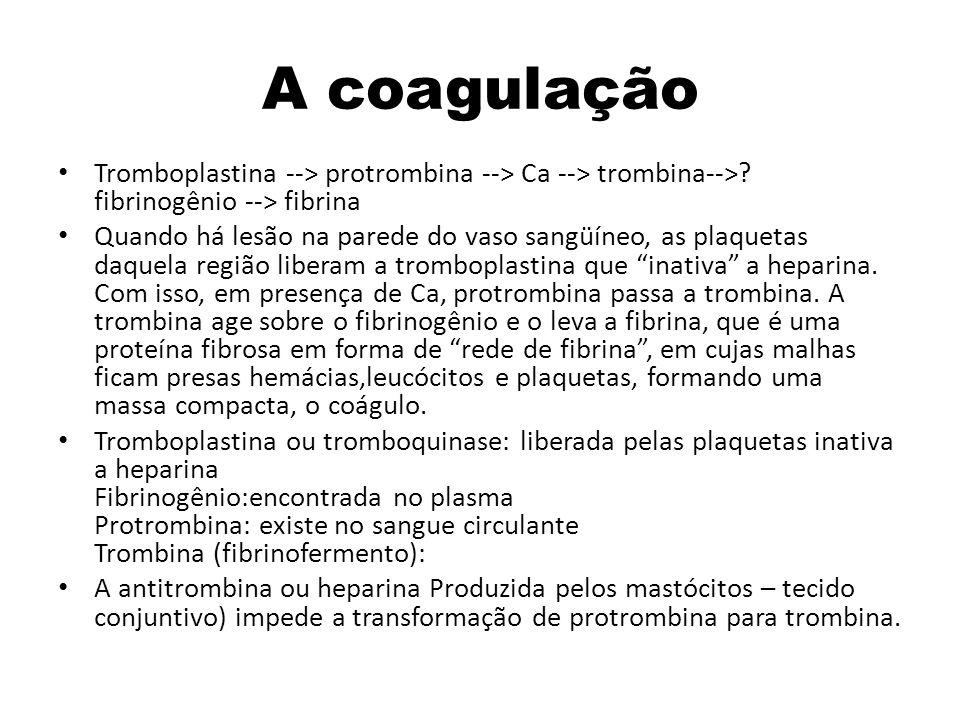 A coagulação Tromboplastina --> protrombina --> Ca --> trombina--> fibrinogênio --> fibrina.