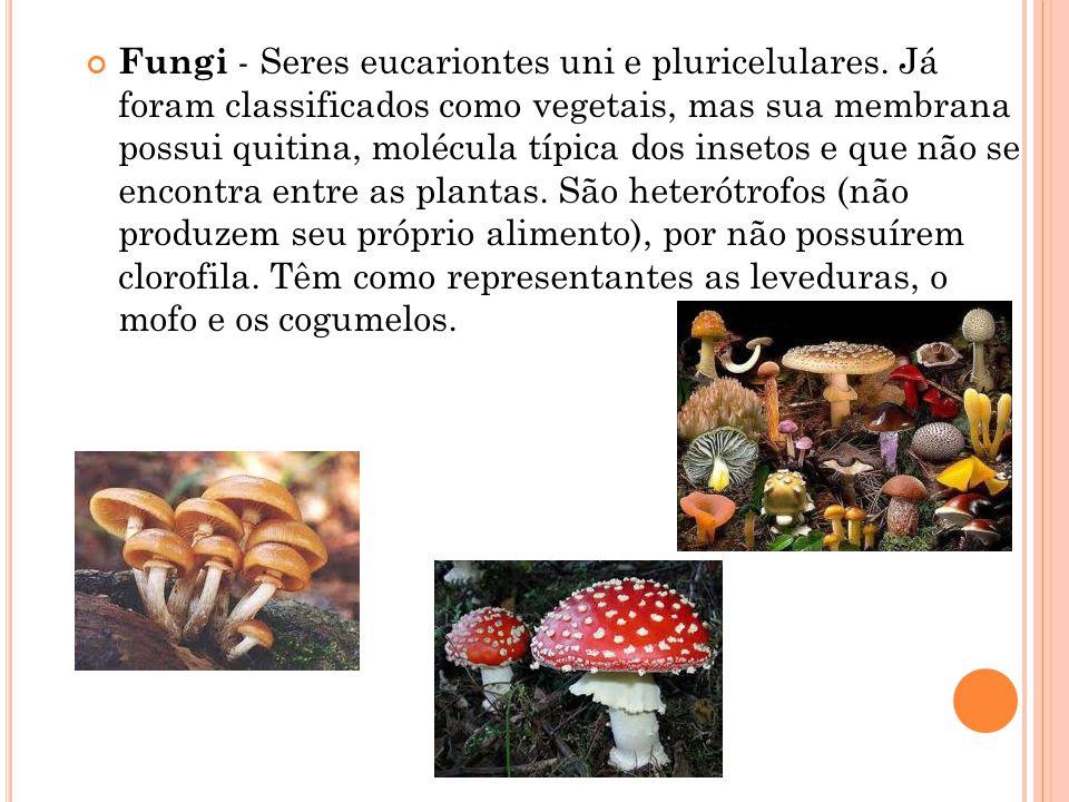 Fungi - Seres eucariontes uni e pluricelulares