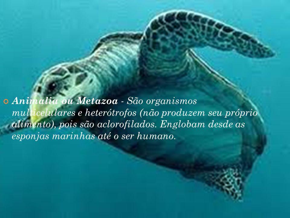 Animalia ou Metazoa - São organismos multicelulares e heterótrofos (não produzem seu próprio alimento), pois são aclorofilados.