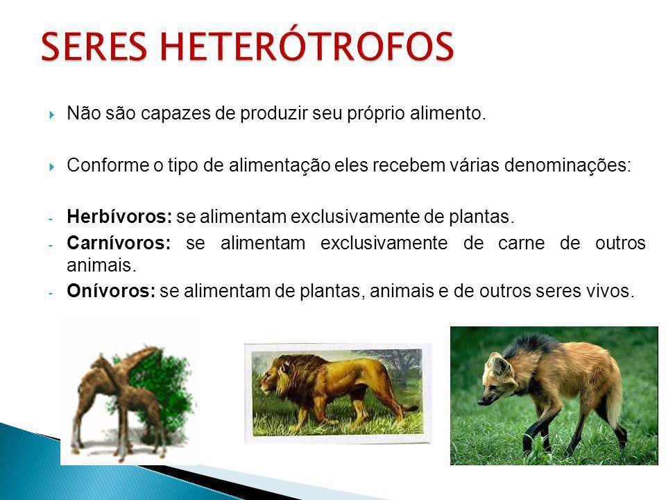 SERES HETERÓTROFOS Não são capazes de produzir seu próprio alimento.