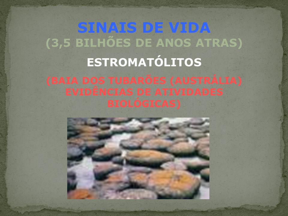 SINAIS DE VIDA (3,5 BILHÕES DE ANOS ATRAS)