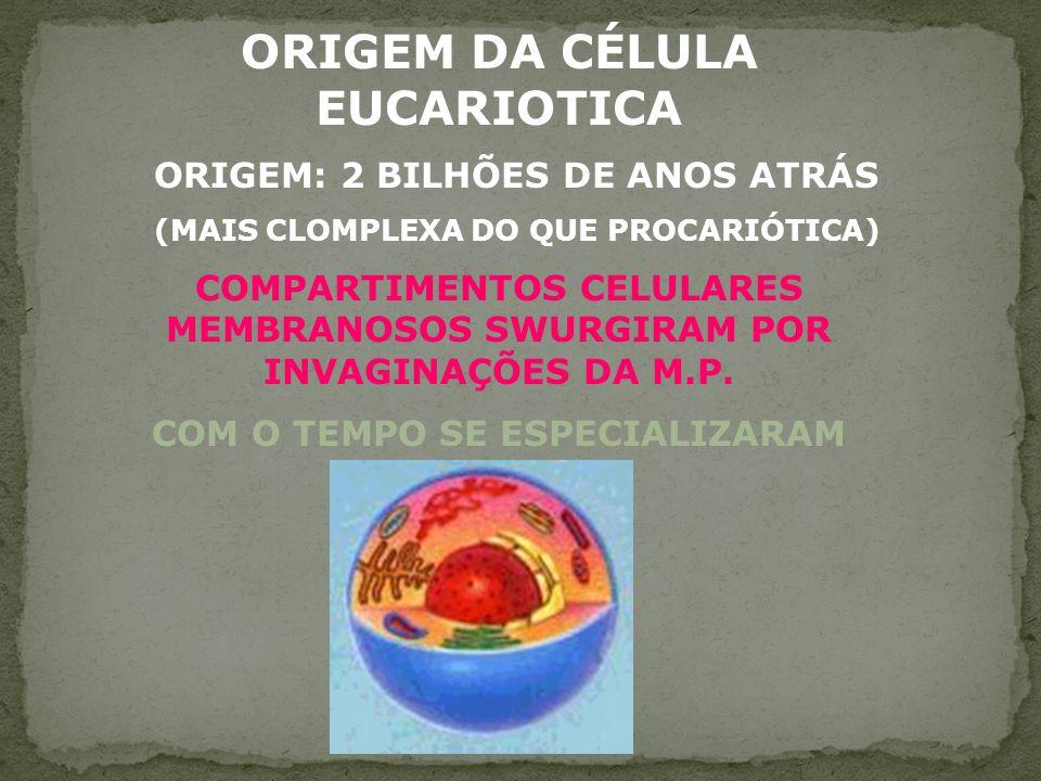 ORIGEM DA CÉLULA EUCARIOTICA