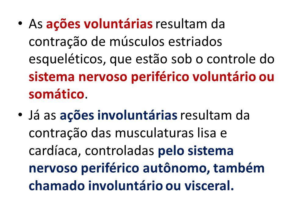 As ações voluntárias resultam da contração de músculos estriados esqueléticos, que estão sob o controle do sistema nervoso periférico voluntário ou somático.