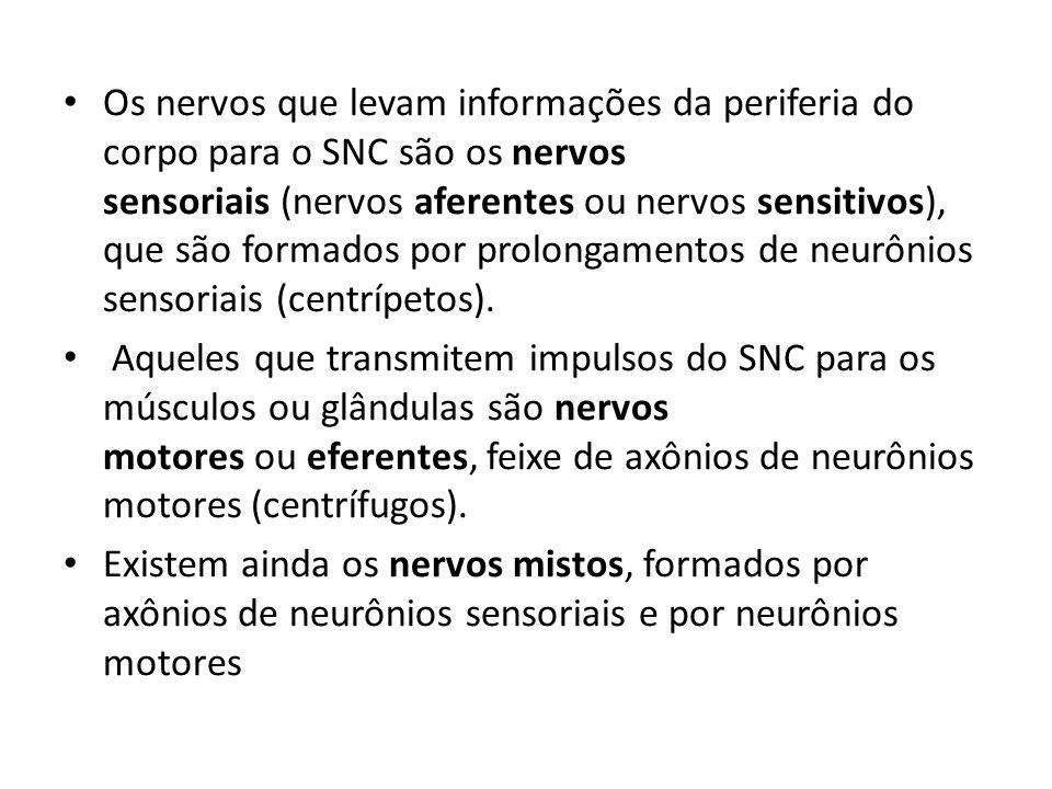 Os nervos que levam informações da periferia do corpo para o SNC são os nervos sensoriais (nervos aferentes ou nervos sensitivos), que são formados por prolongamentos de neurônios sensoriais (centrípetos).