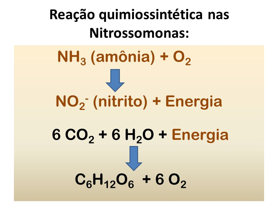 Reação quimiossintética nas Nitrossomonas: