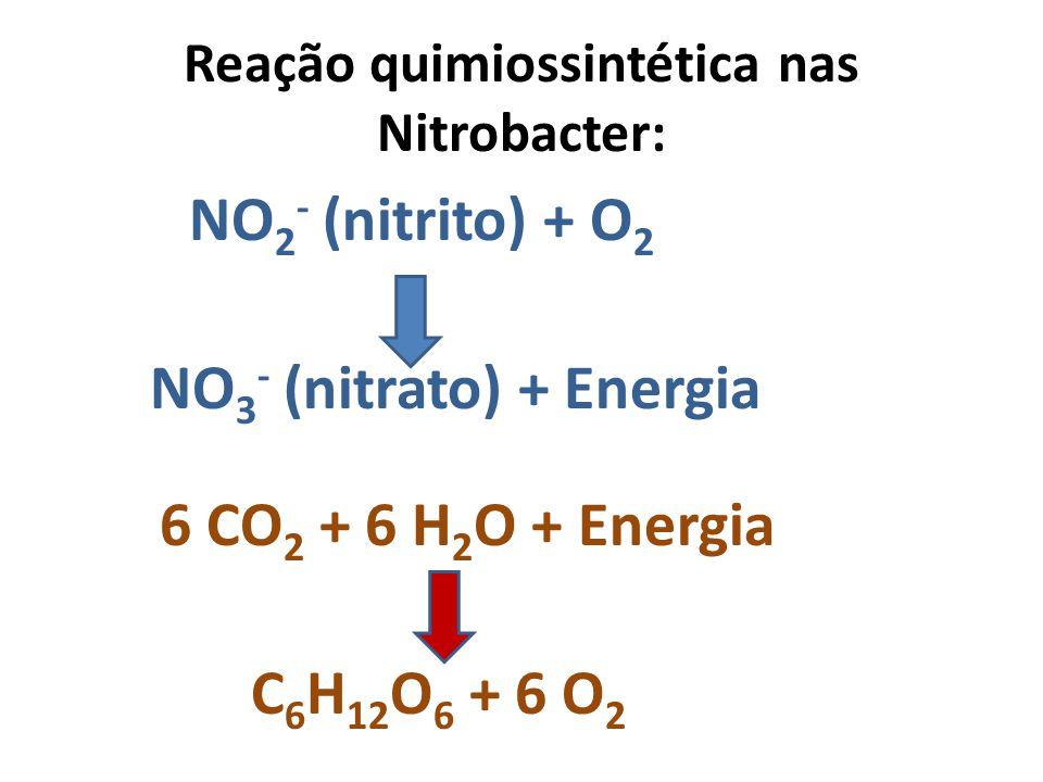 Reação quimiossintética nas Nitrobacter: