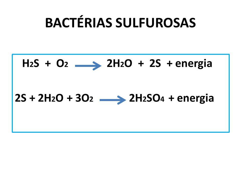 BACTÉRIAS SULFUROSAS 2S + 2H2O + 3O2 2H2SO4 + energia