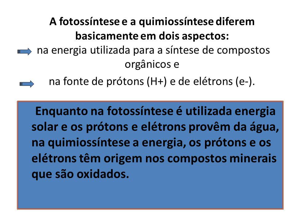 A fotossíntese e a quimiossíntese diferem basicamente em dois aspectos: na energia utilizada para a síntese de compostos orgânicos e na fonte de prótons (H+) e de elétrons (e-).