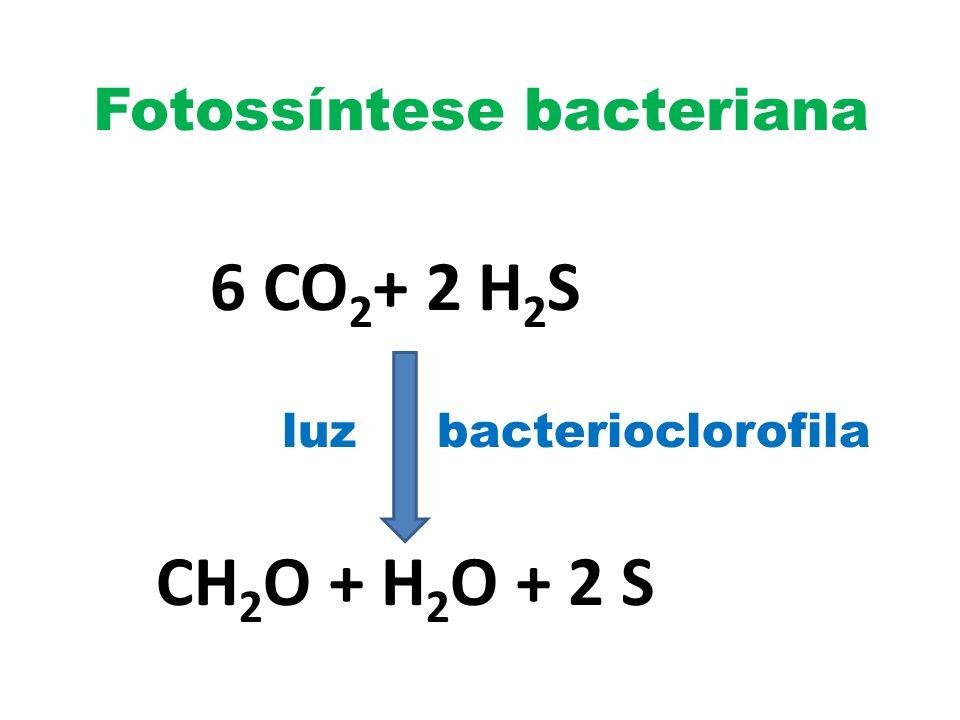 Fotossíntese bacteriana