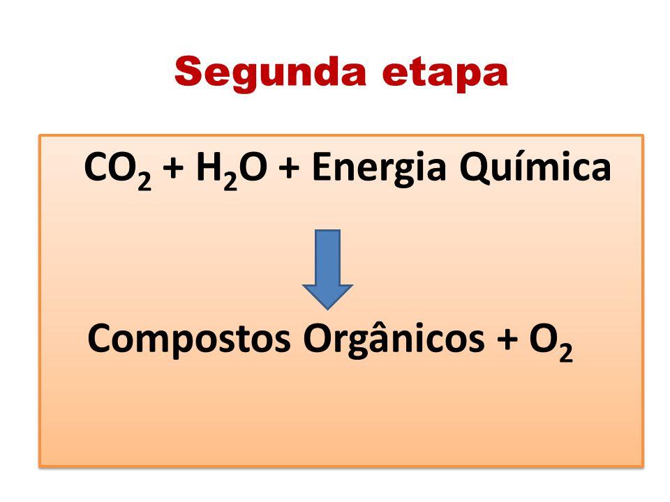 Compostos Orgânicos + O2