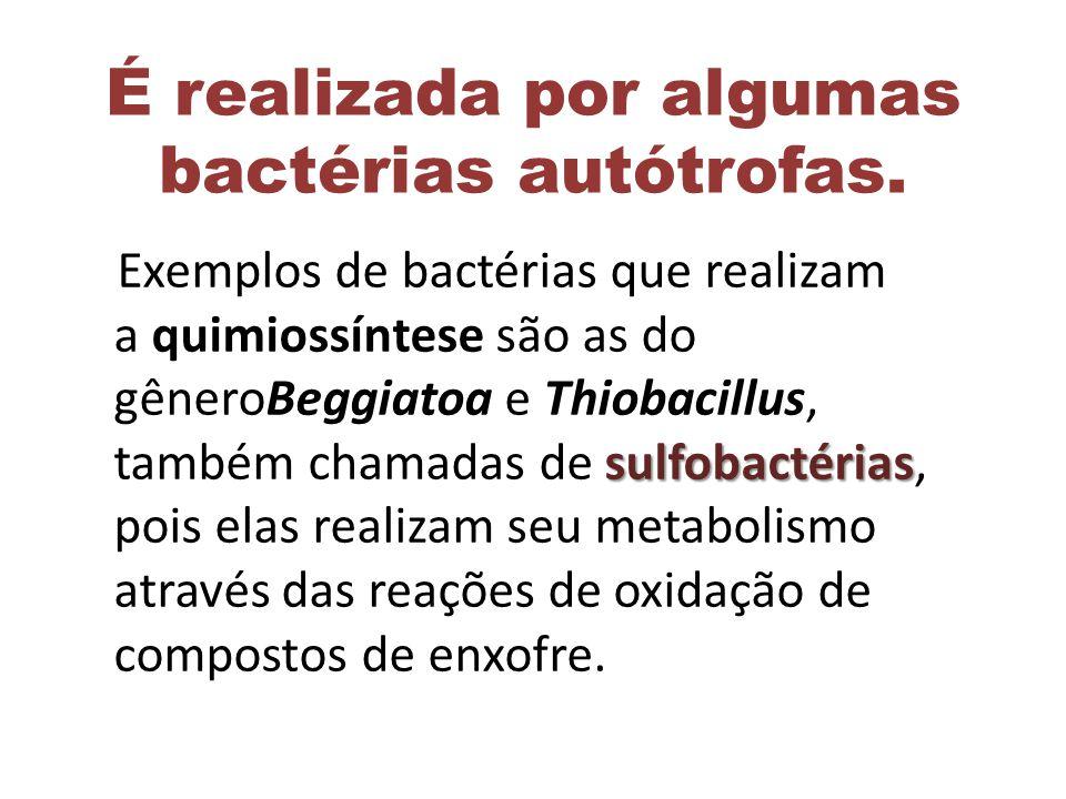 É realizada por algumas bactérias autótrofas.