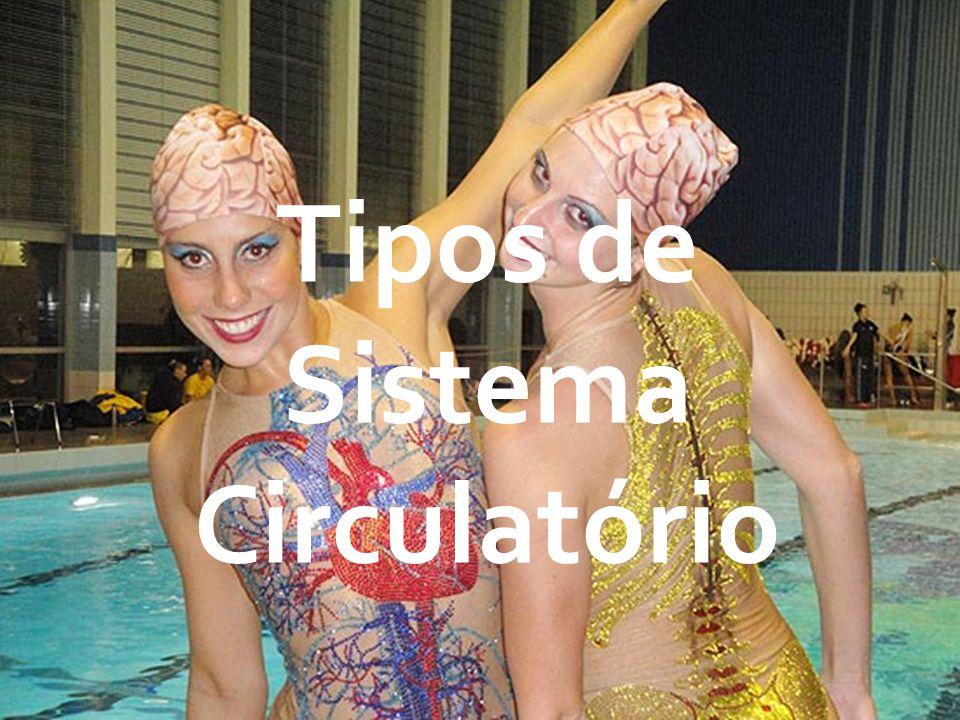Tipos de Sistema Circulatório