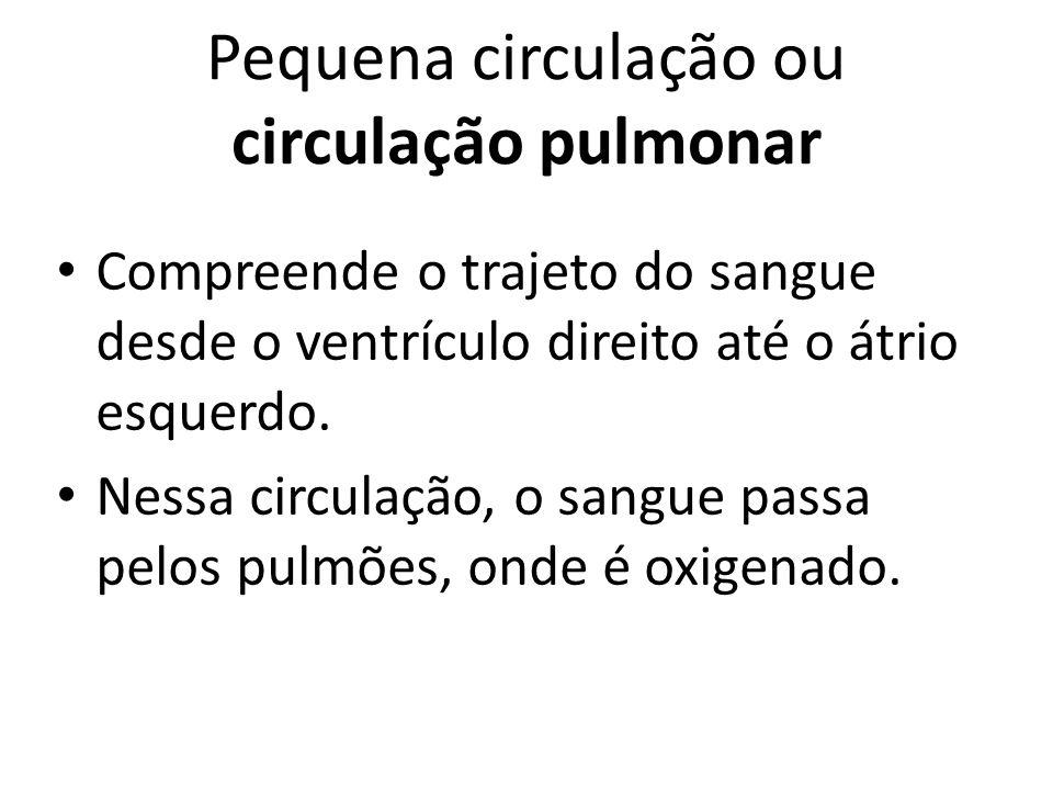 Pequena circulação ou circulação pulmonar
