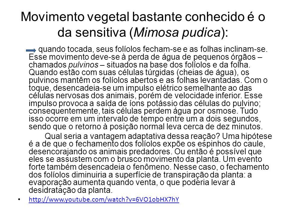 Movimento vegetal bastante conhecido é o da sensitiva (Mimosa pudica):