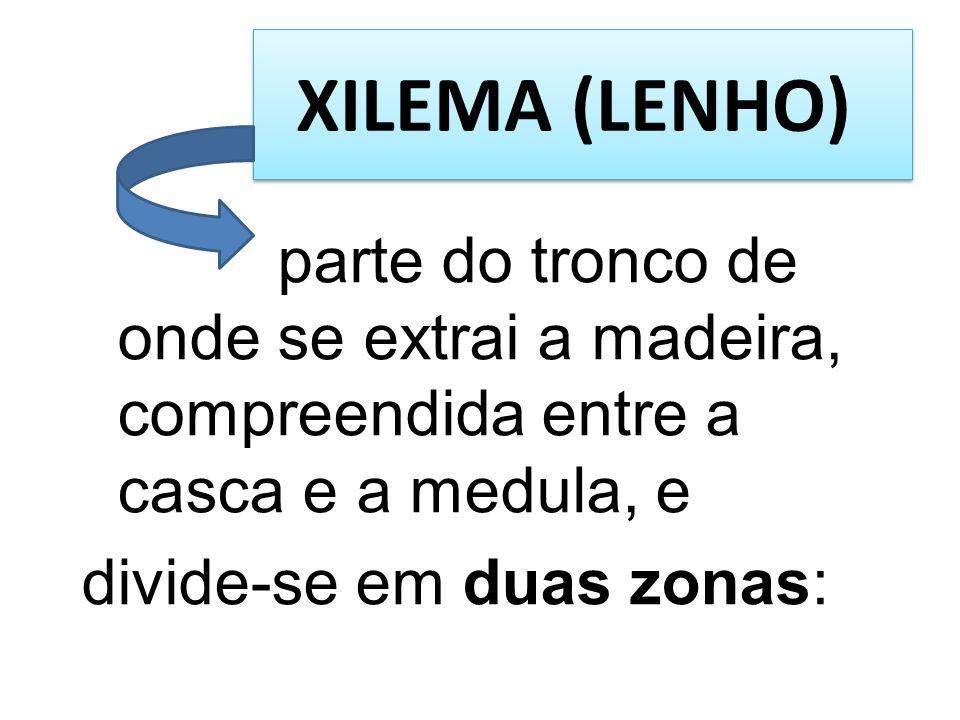 XILEMA (LENHO) parte do tronco de onde se extrai a madeira, compreendida entre a casca e a medula, e.