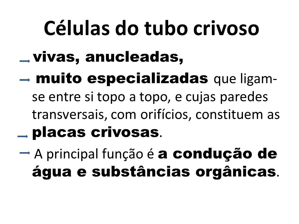 Células do tubo crivoso
