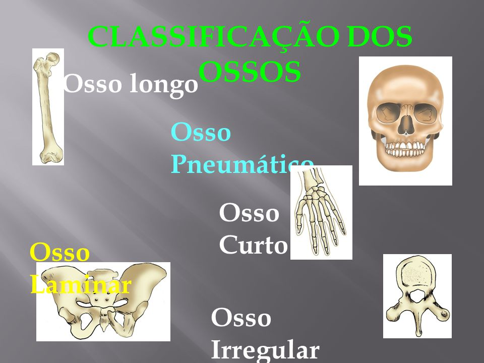 CLASSIFICAÇÃO DOS OSSOS