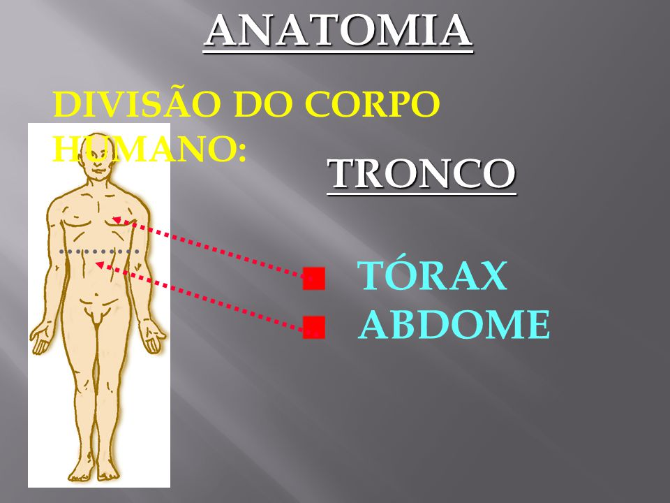 ANATOMIA DIVISÃO DO CORPO HUMANO: TRONCO TÓRAX ABDOME