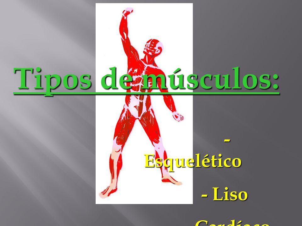 Tipos de músculos: - Esquelético - Liso - Cardíaco