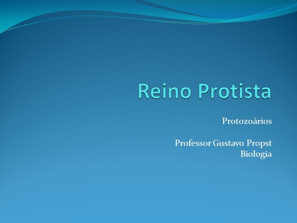 Reino Protista Protozoários Professor Gustavo Propst Biologia