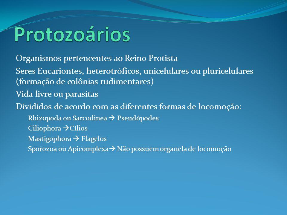 Protozoários Organismos pertencentes ao Reino Protista
