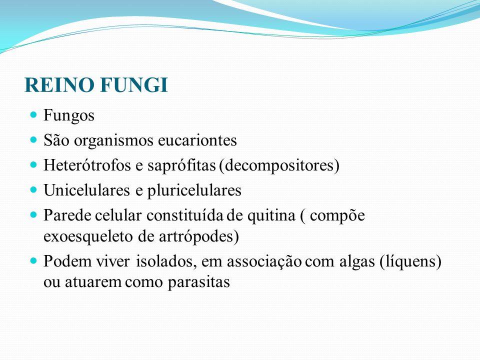 REINO FUNGI Fungos São organismos eucariontes