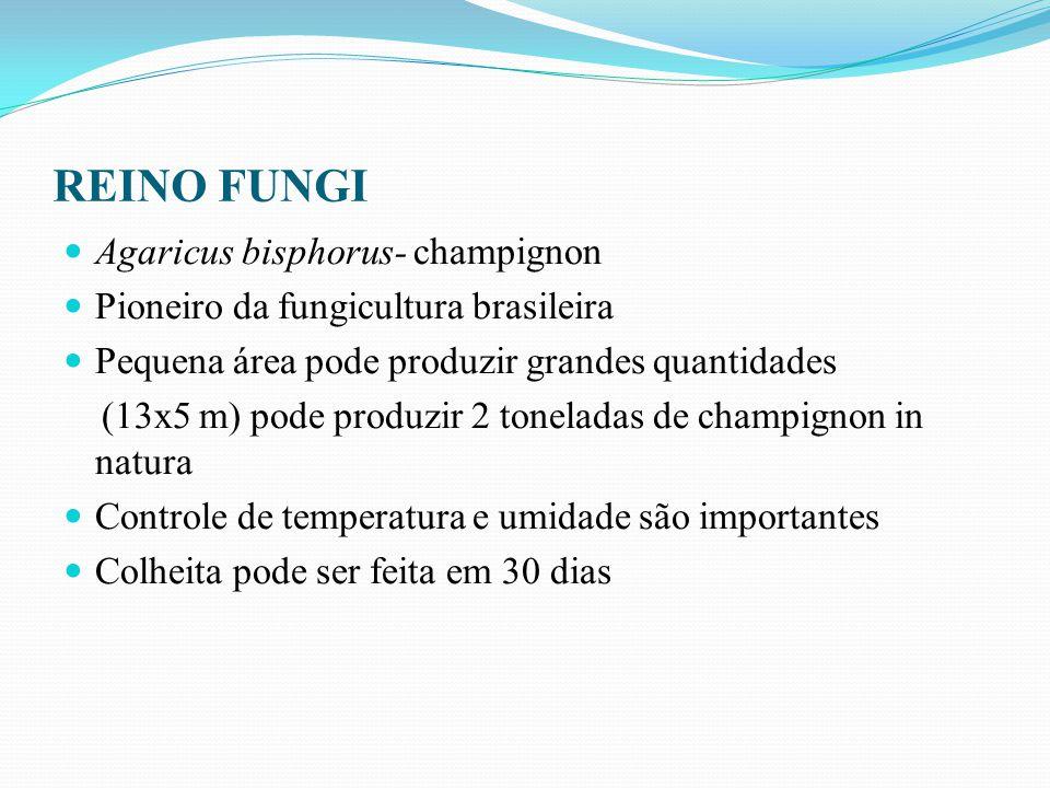 REINO FUNGI Agaricus bisphorus- champignon