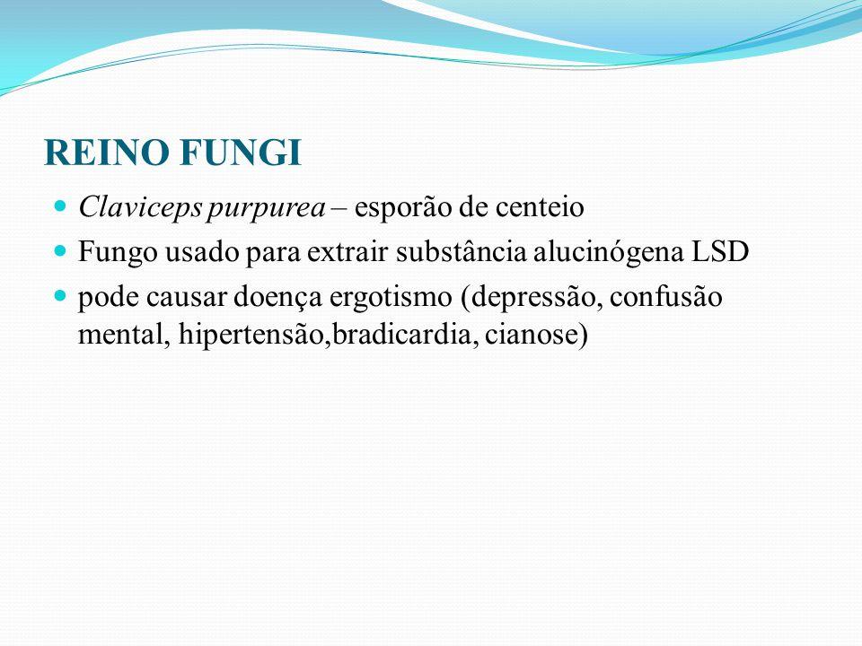 REINO FUNGI Claviceps purpurea – esporão de centeio