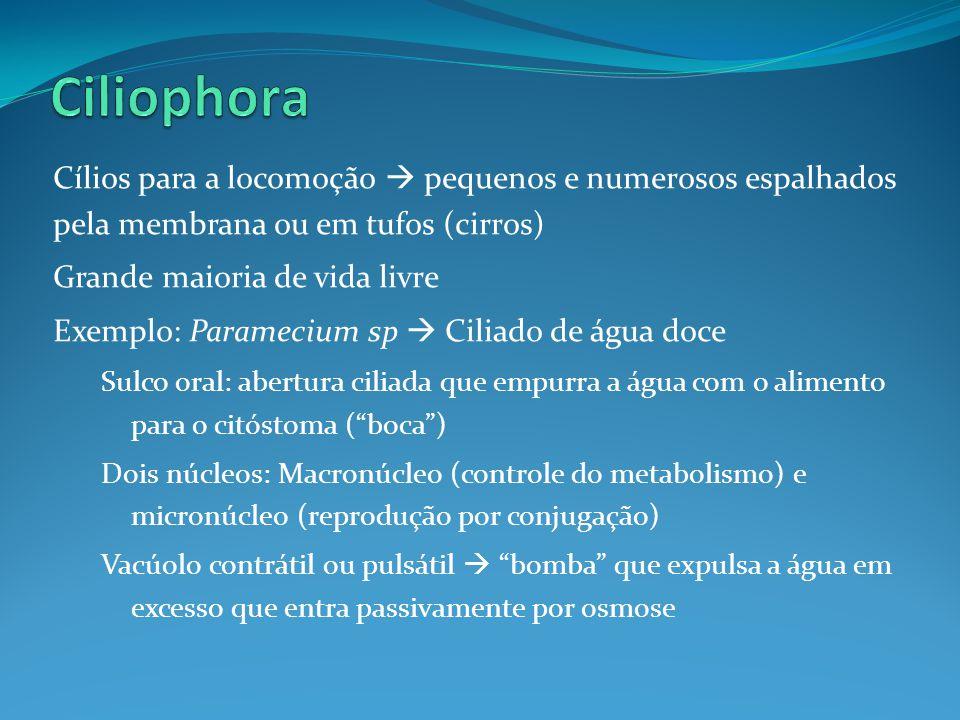 Ciliophora Cílios para a locomoção  pequenos e numerosos espalhados pela membrana ou em tufos (cirros)