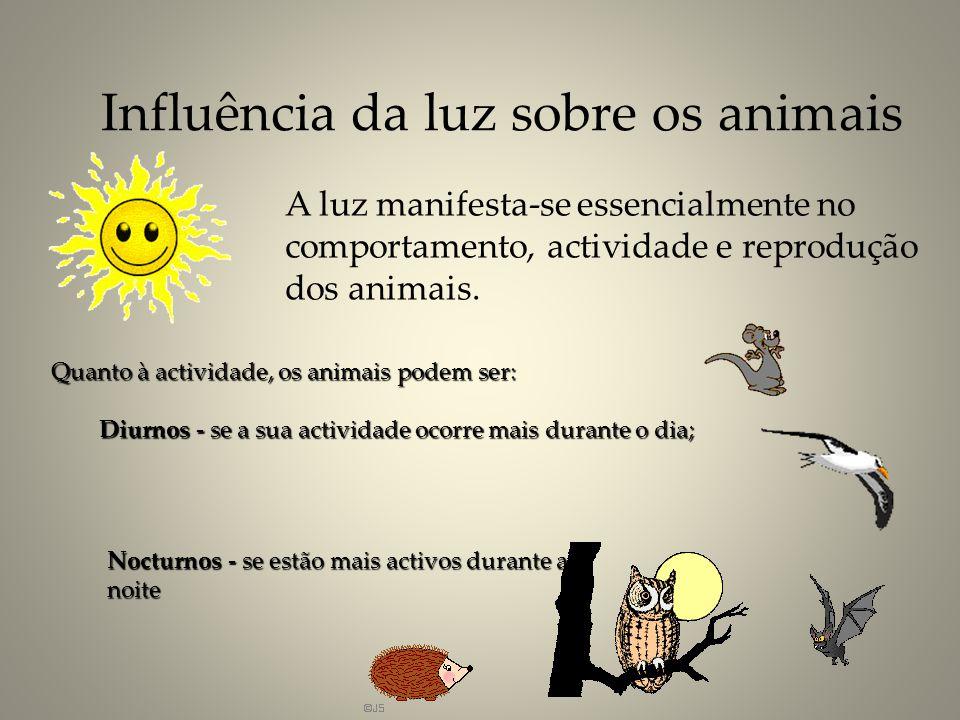 Influência da luz sobre os animais