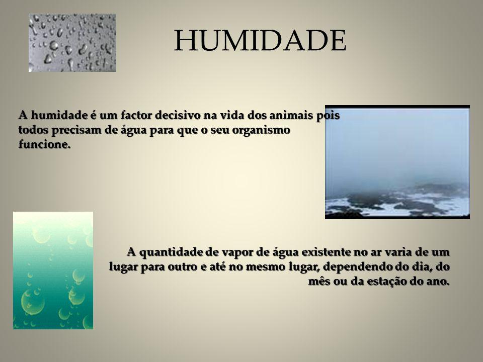 HUMIDADE A humidade é um factor decisivo na vida dos animais pois todos precisam de água para que o seu organismo funcione.