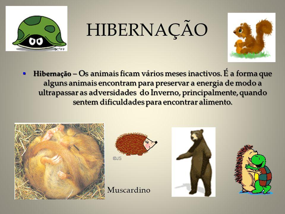 HIBERNAÇÃO Muscardino