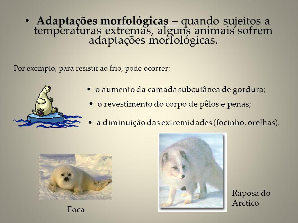 Adaptações morfológicas – quando sujeitos a temperaturas extremas, alguns animais sofrem adaptações morfológicas.