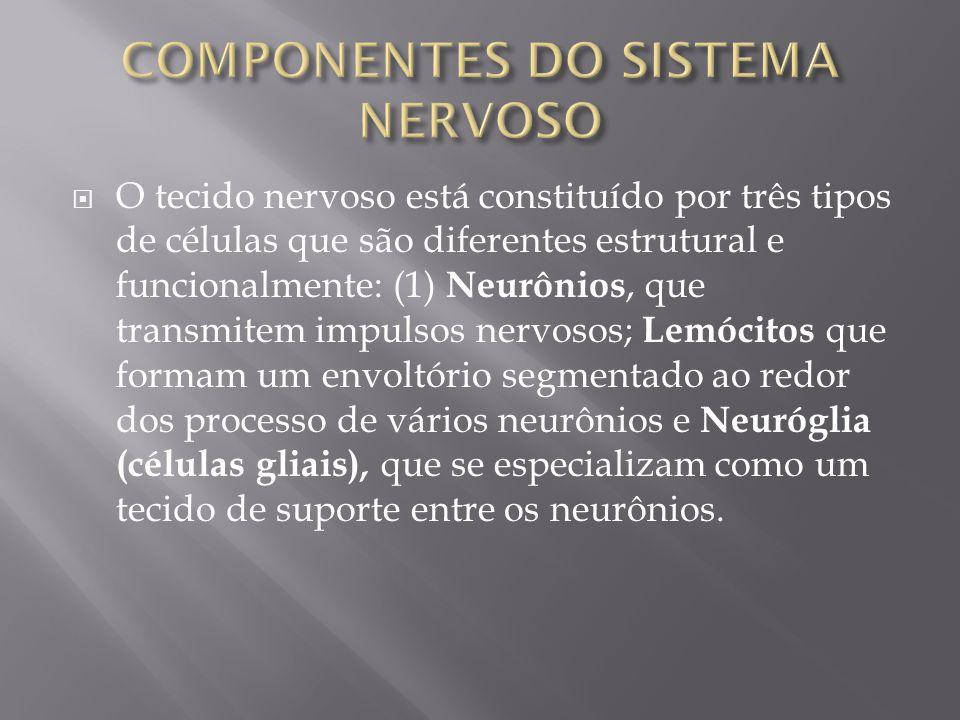 COMPONENTES DO SISTEMA NERVOSO