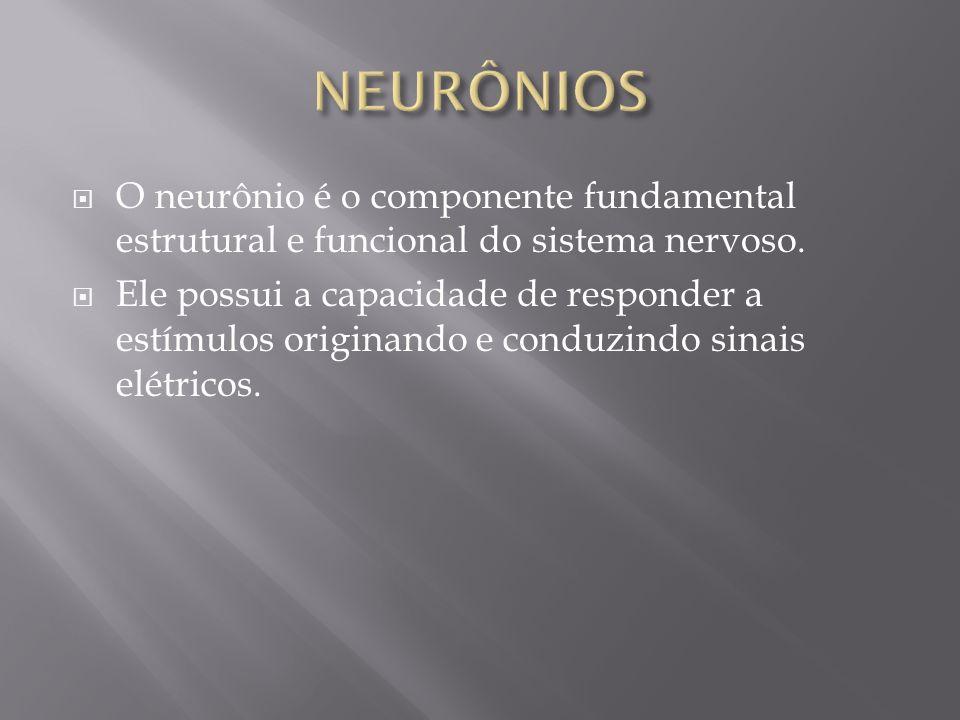 NEURÔNIOS O neurônio é o componente fundamental estrutural e funcional do sistema nervoso.