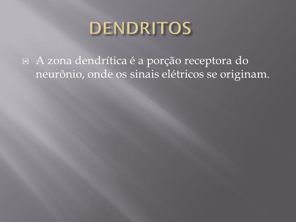DENDRITOS A zona dendrítica é a porção receptora do neurônio, onde os sinais elétricos se originam.